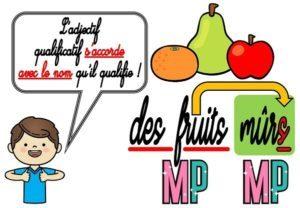 Les adjectifs qualificatifs (CM/Grammaire/Les affichages)